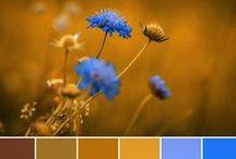 Colour - design seeds / Colour palettes