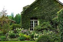 Gardens and Gardening / by Carol Farrow