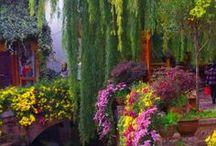 Bloom'n Beautiful ... / by Eleanor Rawinia Tuhi