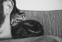 Animals / by Khai-lin Knoll