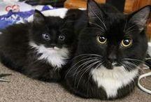 Cats / by Philipp aka badbugs_art