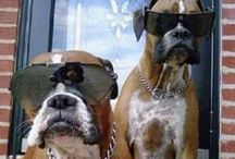 Boxers! / by Jill Stephens