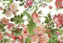 ✿ Flowers Illustrations, Paintings and Frames ✿