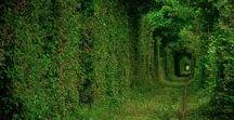 Tunnel of Love - Ukraine / Oggi promon.it vi parla di un luogo considerato il più romantico al mondo: Il tunnel dell'amore. Siamo nei pressi del villaggio di Klevan, a 25 km da Rivne, nel Nord Ovest dell'Ucraina. ( guarda la mappa )