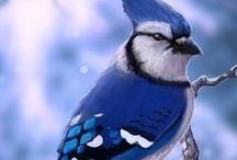 Animals: Birds / Photo galleries dedicated to birds.