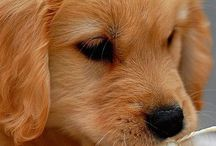 Animals: Dogs / Photo galleries dedicated to dogs.