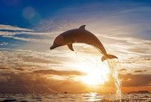Animals: Dolphins / Photo galleries dedicated to dolphins.