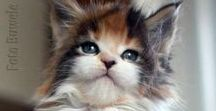 Cats / Fluffy balls of looooove!