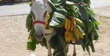 ドンキー Donkeys