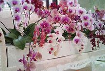 Kvety zahrada
