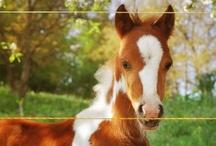 Beautiful Equine / by Carol