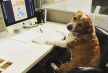 D.I.G. Dogs / Get to know the dogs of Dog is Good! / by Dog is Good