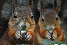 Squirrel's & Chipmunk's R Cute 2 / by Lisa Brown  ♥♥