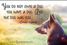Dog is Good Quotes / by Dog is Good