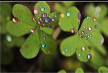Lucky / Blessed to live in the land of rainbows and lucky stars...  / by Karen Weikert