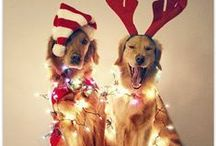 Dog is Good for the Holidays / Happy Holidogs everyone! / by Dog is Good