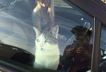 ✧・゚: *✧・゚:*ᑕᗩTᔕ ✧・゚: *✧・゚:* / cats are strange