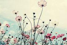 Poetry&Flowers