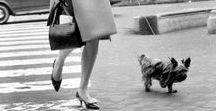 Walk in style / Un día cualquiera en 2017.. me dijeron: ¡Qué guapa vas para pasear con el amigo canino!  Y respondí: ¡Claro! ;) CANES CON MODALES   #ServicioPaseadoresCaninosADomicilio