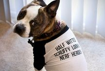 For our Scruffy-Looking Nerfherder / Four our hero rescue dog, Han Solo - a forty pound terrier mix  / by Heather Braman Gaton