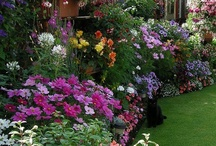Gardening and Exterior Ideas / by Lisa Purko
