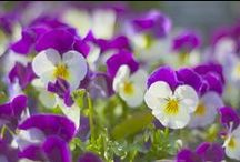 Gardens in Bloom / Beautiful blooms all year round