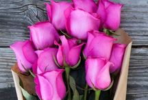 Flora ~ Flowers  / I LOVE Floras  / by Wasma Bakr
