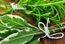 Grow Herbs! / A wonderful collection of herbs to inspire gardens big and small.