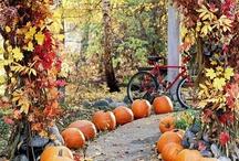 Ideas-an autumn/fall/orange theme