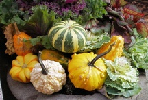 Outdoor Fall Decorating  / by Burpee Gardens