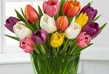 Garden Bouquets! / Beautiful bouquet arrangement ideas both big and small