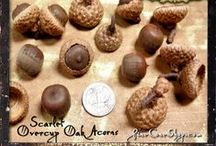 ACORNS / Different types of Acorns and Acorn Caps / by PineConeLady Crafts