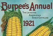 Vintage Burpee Seed / Burpee was incorporated in 1876 and has been producing yearly catalogs since. Burpee catalogs are infamous and the covers can be very telling of the time period. #burpeeseeds
