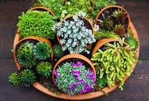 Container Gardens / Containers are a great way to grow vegetables or flowers, the possibilities are endless!