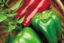 Grow Peppers! / Tips, Tricks and How To grow perfect peppers this season!