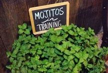 Garden Signs / A combination of diys and ideas to label your garden for the harvest.