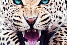 photo. nature - wild cats / ...cats, the unification of grace, power and majesty...