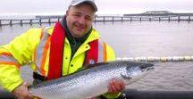 Aquaculture NZ Salmon