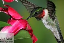 Birds - my favorite! / If it has a bird on it, I like it! / by Jill Hargis