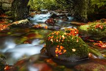 Fall!! / by Theresa Johnson