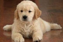 It's so fluffy, I'm gonna die!!!! / by Caroline Baker