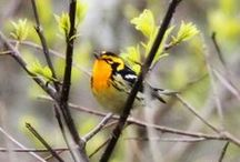 Birds! / by Rachel Chilton