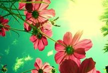 Planter & Blomster!!