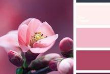 Pink / Kolor różowy