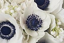 Flowers / by Wedding Decorator