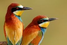 birds / by Tami Horovitz