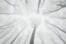 Photography / by Oscar Busman