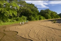 Zululand Walking Safaris / Walk with one of our experienced trails guides as they lead you through the African bushveld.