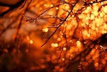 Autumn & Samhain