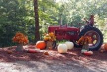 Happy Fall Y'all / Corn mazes, pumpkin patch, and family fun! All the adventures of Dawson County for the Fall!